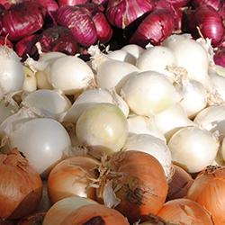 Satılık 100 Ton Kuru Soğan