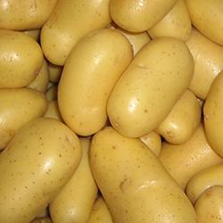 Satılık 30 Ton Patates
