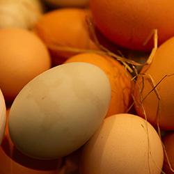 Satılık 10000 Adet Köy Yumurtası
