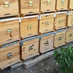 Satılık 110 Adet Arı Kovanı