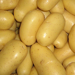 Satılık 200 Ton Kışlık Patates