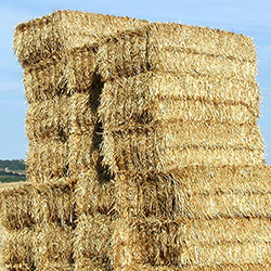 Satılık 700 Adet Balya Buğday Samanı