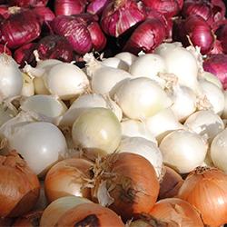 Satılık 20 Ton Soğan